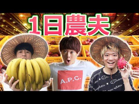 一日農夫體驗外國人超驚訝!超好吃的台灣水果種植方法大公開!
