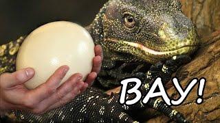 Выращиваем гомункула в яйце ВАРАНА!!!Как правильно создать гомункула?//СИМУЛЯТОР ГОМУНКУЛА