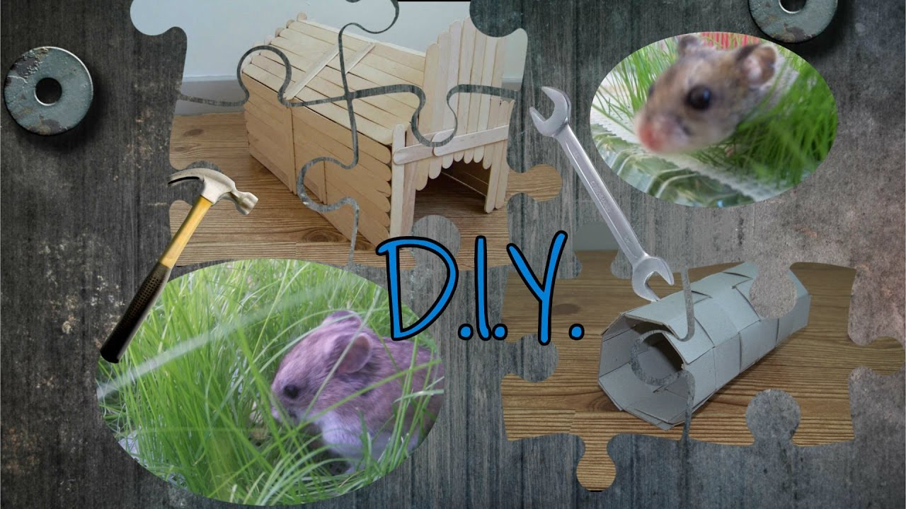 Diy guinea pig house bonus project for hamsters youtube for How to build a guinea pig house
