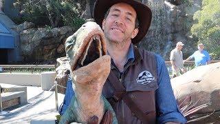 A Dino Filled Day At Universal Studios Hollywood! | Jurassic World, Backlot Tour & HHN Prep!!