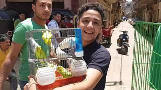 جولة بعد العيد(ج٣)#جمهورية_المحله_الكبري_للحمام Egyptian pigeon's market 2019