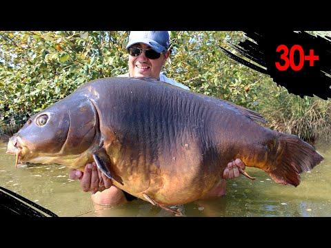 Big Carpe 30+ Sur Une Touche