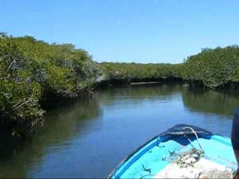Fishin' In Puerto A. Lopez Mateos