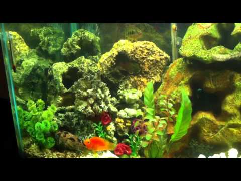 Saltwater & Freshwater Fish Living Together