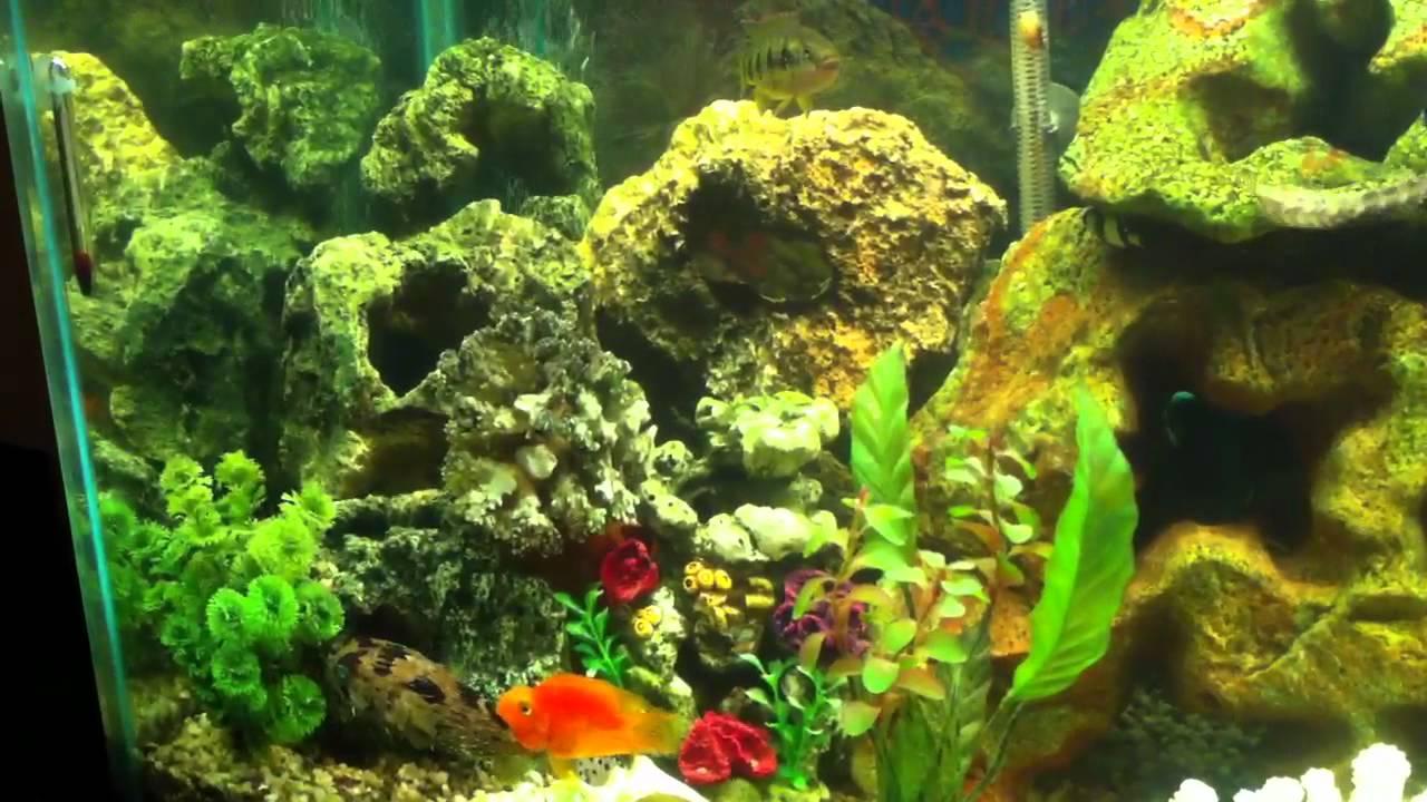 Freshwater aquarium fish that look like saltwater fish - Saltwater Freshwater Fish Living Together
