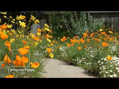 California Friendly™ Garden of the Month - June 2017