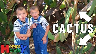 Lost in a Cactus Forest    Mommy Monday