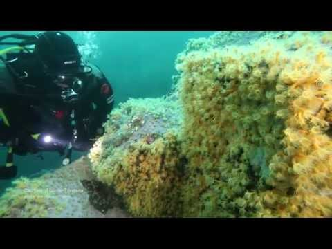 Tentacles in Darkness: New Life Found off Patagonia | One Minute Dive With Pew