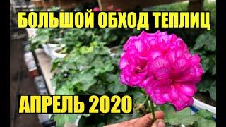 Что сегодня растет? Апрель 2020. Обход