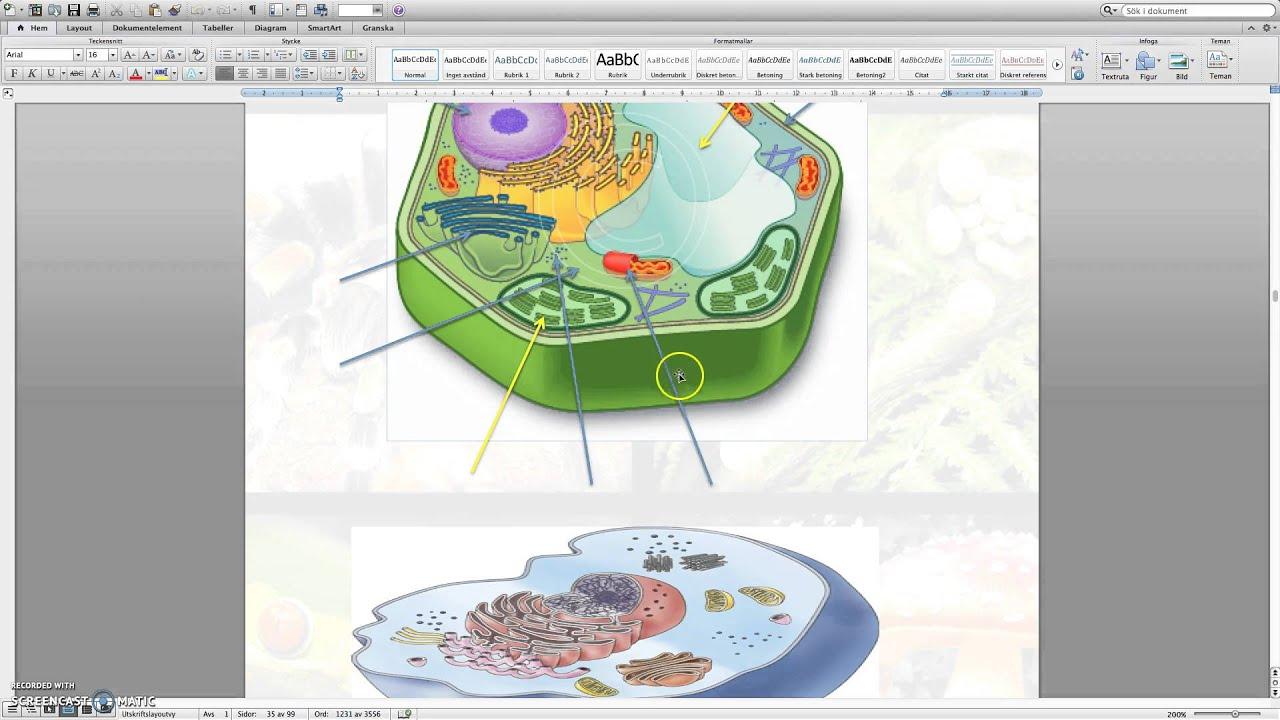 Cellens struktur - Grundläggande fakta