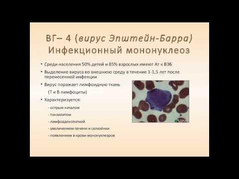 Типы вируса герпеса – 1 (простой) тип, 2,3,4,5,6,7,8 тип