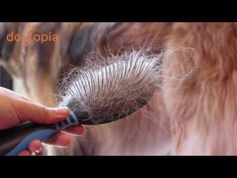 Grooming 101: What brush do you use for your dog?
