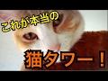 【幸せになれる光景】これがホントの猫タワー!