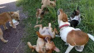 ハイサイ!愛犬物語のブログ、動画へようこそ(^^♪。。沖縄産まれの犬た...