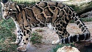 Động vật trong sách đỏ tại Việt Nam
