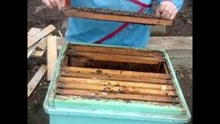 Весения обработка пчёл.(, 2016-02-15T12:33:19.000Z)