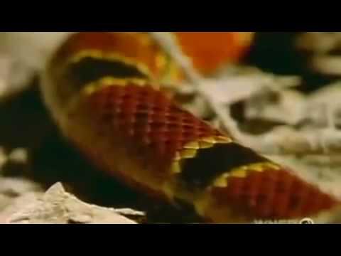 World's Deadliest Snakes Nature,Snake eater,Snake eye