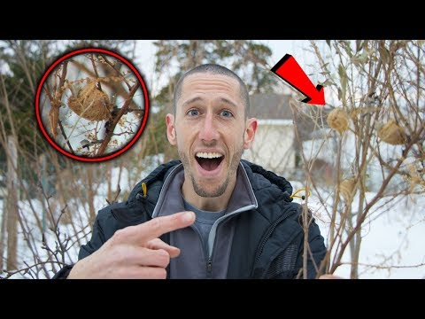 How To Find PRAYING MANTIS For Your GARDEN! Proactive Pest Control