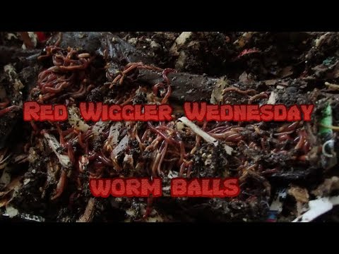 Red Wigglers | Horizontal Migration 10-30-19