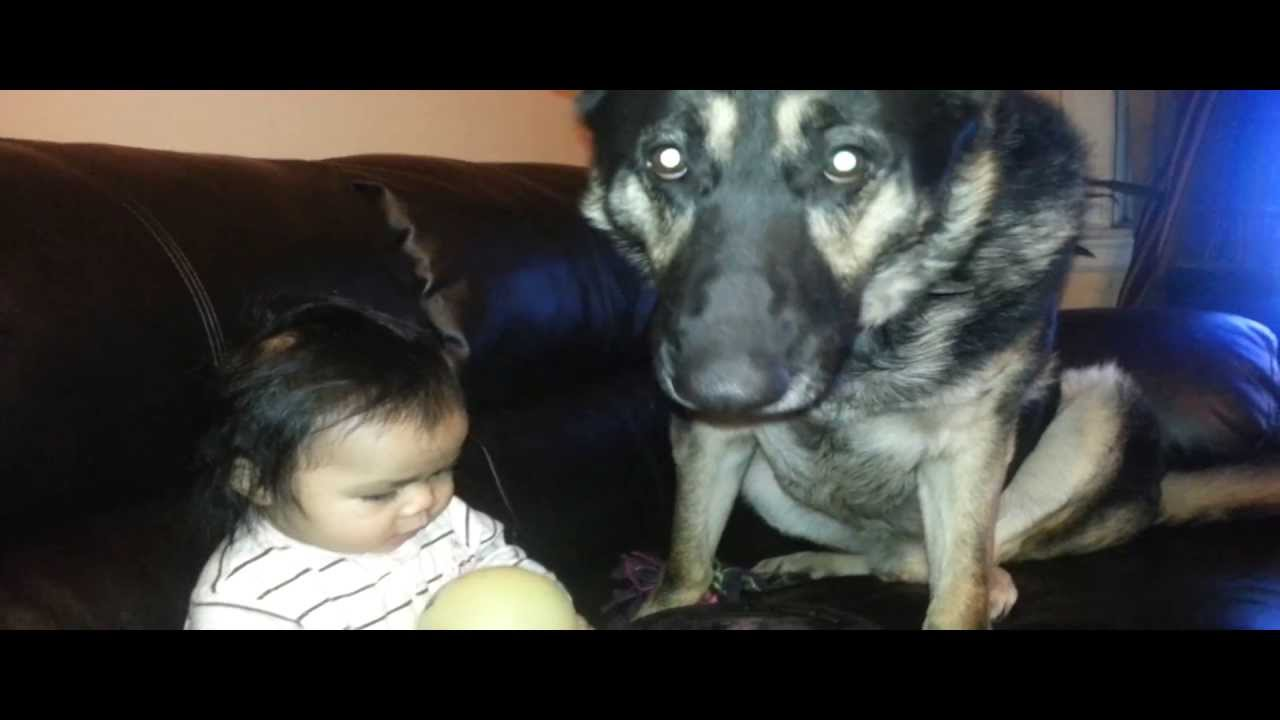 German Shepherd Has Extreme Self Control With Baby YouTube - This dog has some serious self control that will make you laugh