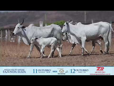 LOTE 221