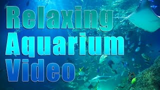 Aquarium Relaxation Video | 1.5 Hours of fish, sharks, stingrays and marine life @ Michigan Sea Life