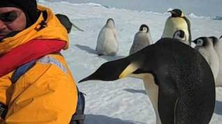 Emperor Penguin - Close Encounter of the Third Kind