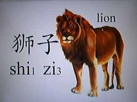 Learn Chinese - Bear, Tiger, Lion, Panda