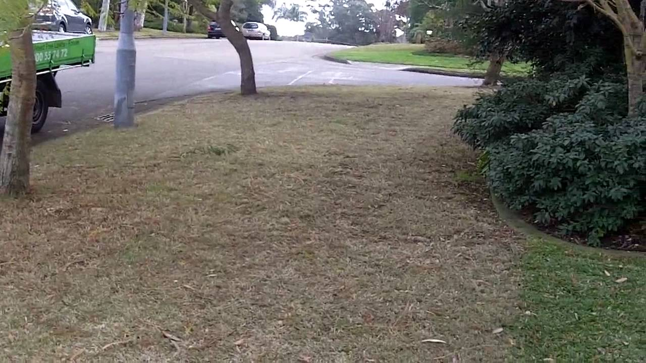 Lawn Care Tips Sir Walter Weed Control Couch Bermuda Gr Buffalo