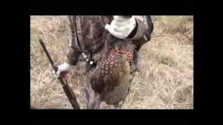 Охота на фазана в Астраханской области видео