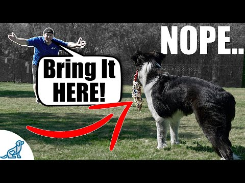 Fix Your Fetch! - For Dogs That Don't Bring It Back