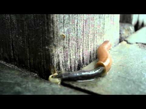 Pele de cobra - 1 part 10