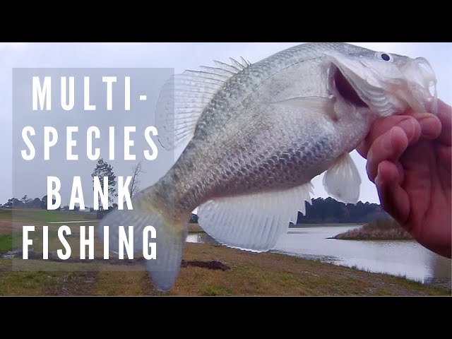 Multi-Species Bank Fishing | White Crappie, Channel Catfish and Largemouth Bass