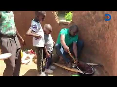 BACK TO MY ROOTS! Senator Murkomen showcases his prowess in cooking brown ugali in the village