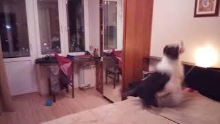 #1   Бордер Колли   Чем занять собаку дома?