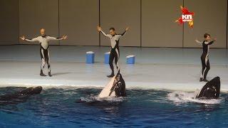 """Уникальное водное шоу в """"МОСКВАРИУМЕ""""/ The unique water show in the """"MOSKVARIUME"""""""