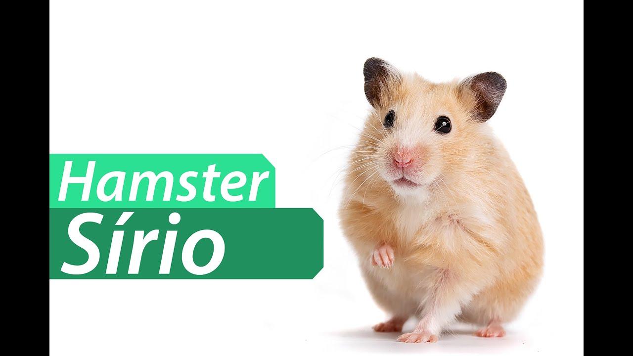 Xhamster www com