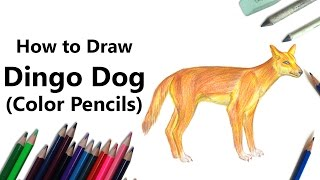 How to Draw a Dingo with Color Pencils [Time Lapse]