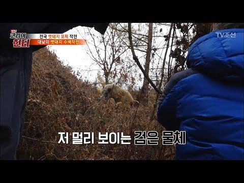 제작진과 헌터 사이에서 대치중인 멧돼지 가�