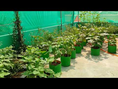 Organic Terrace Garden - Kanchipuram - 2015