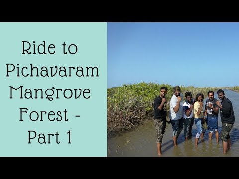 Chennai Bulls Trip to world's 2nd Largest Mangrove Forest(Pichavaram Forest) Part - 1