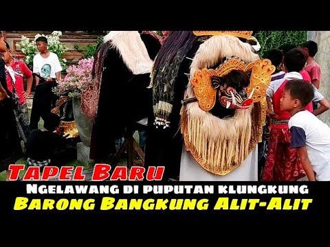 Paling Seru, Barong Bangkung Alit-Alit Ngelawang Di Klungkung