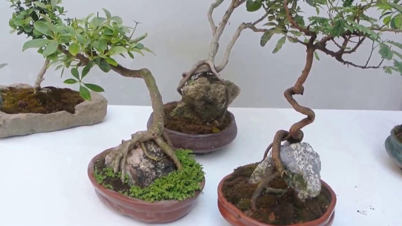 piedras volcanicas para las plantas youtube