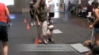 Sit Means Sit Las Vegas Dog Training, Deaf Bull Terrier