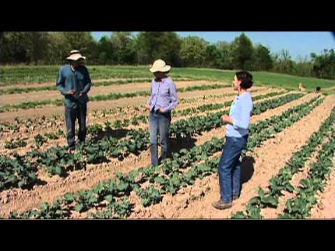 Three Springs Farm- Organic Fruit and Herb Growers
