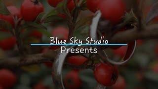 Blue Sky Studio - свадебная съемка