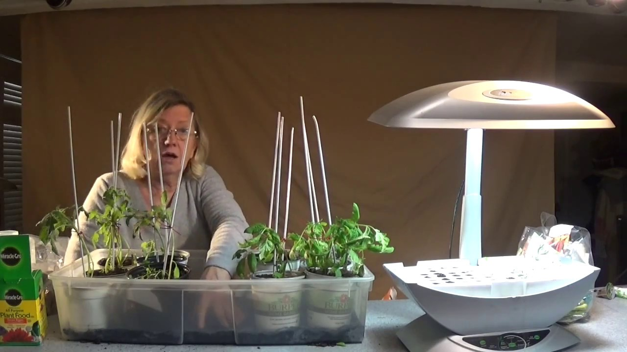 Aerogarden Sprouting tray - Transplanting the first plants and ...