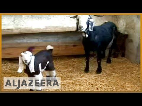 Iranian scientists clone goat