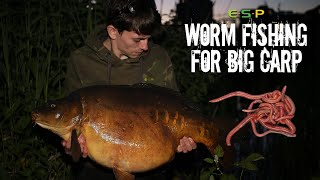 Worm Fishing for BIG CARP | Alfie Russell