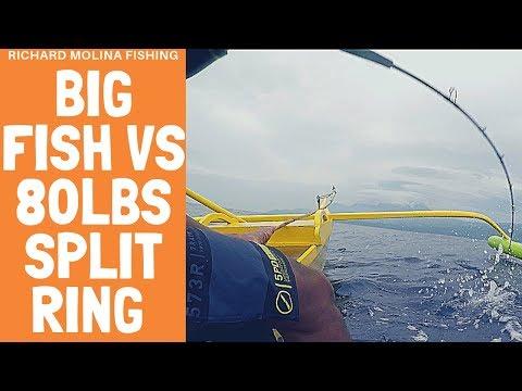 Big FISH Vs 80lbs Split Ring